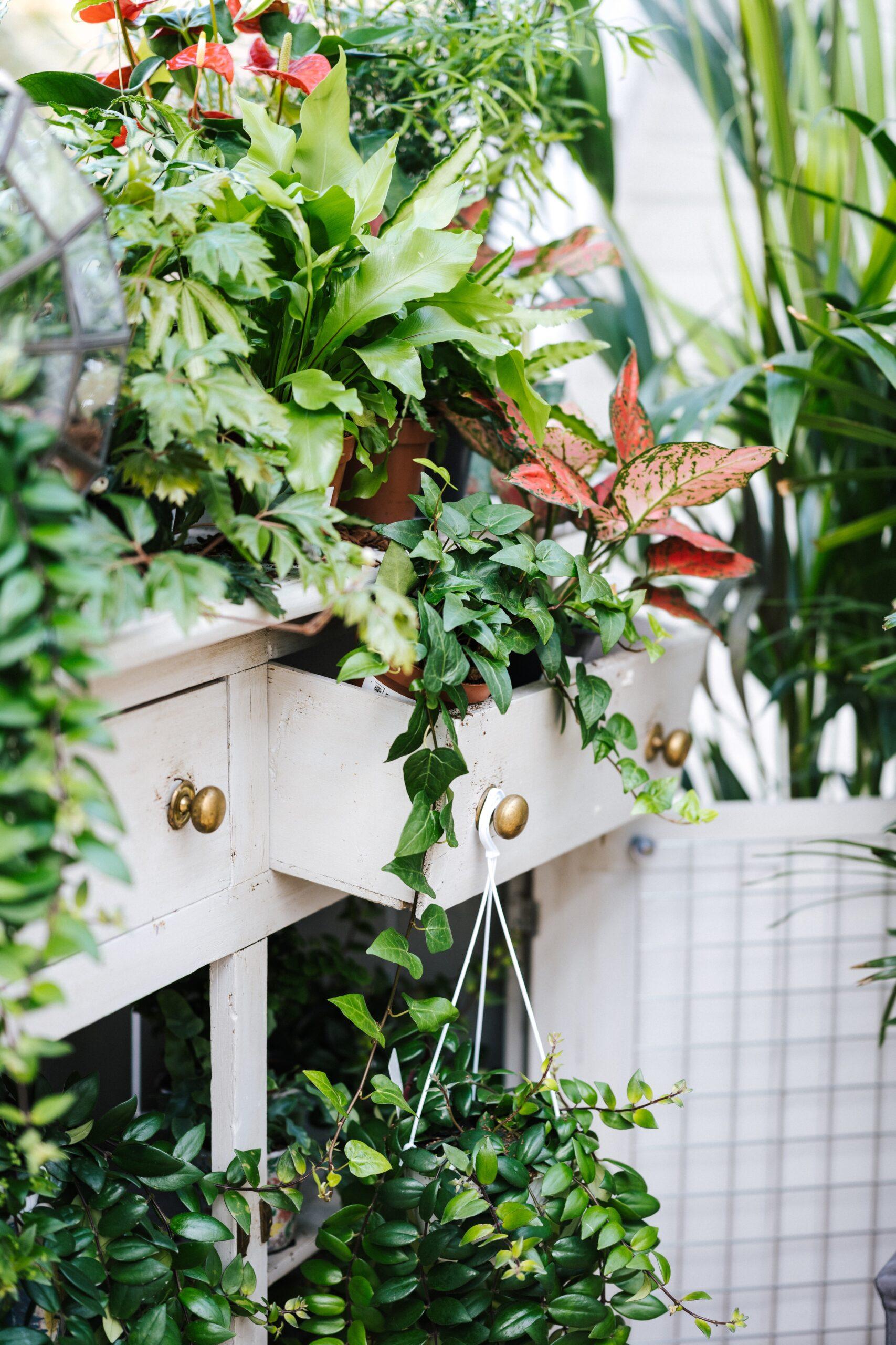floricultura vivaio campana