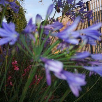 fiori progettazione