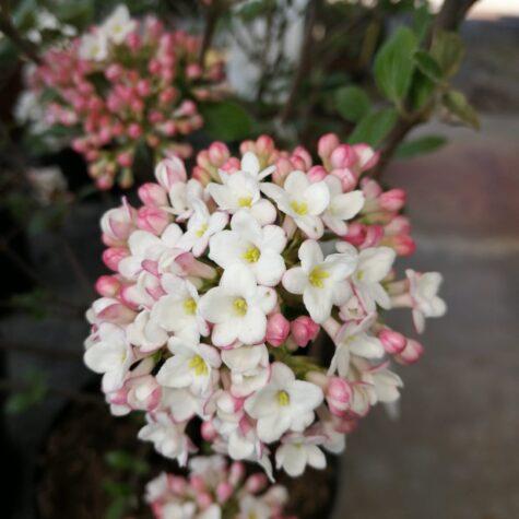 floricultura campana ghisalba