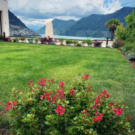 manutenzione giardino vivaio campana