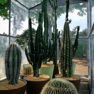 piante grasse per eventi