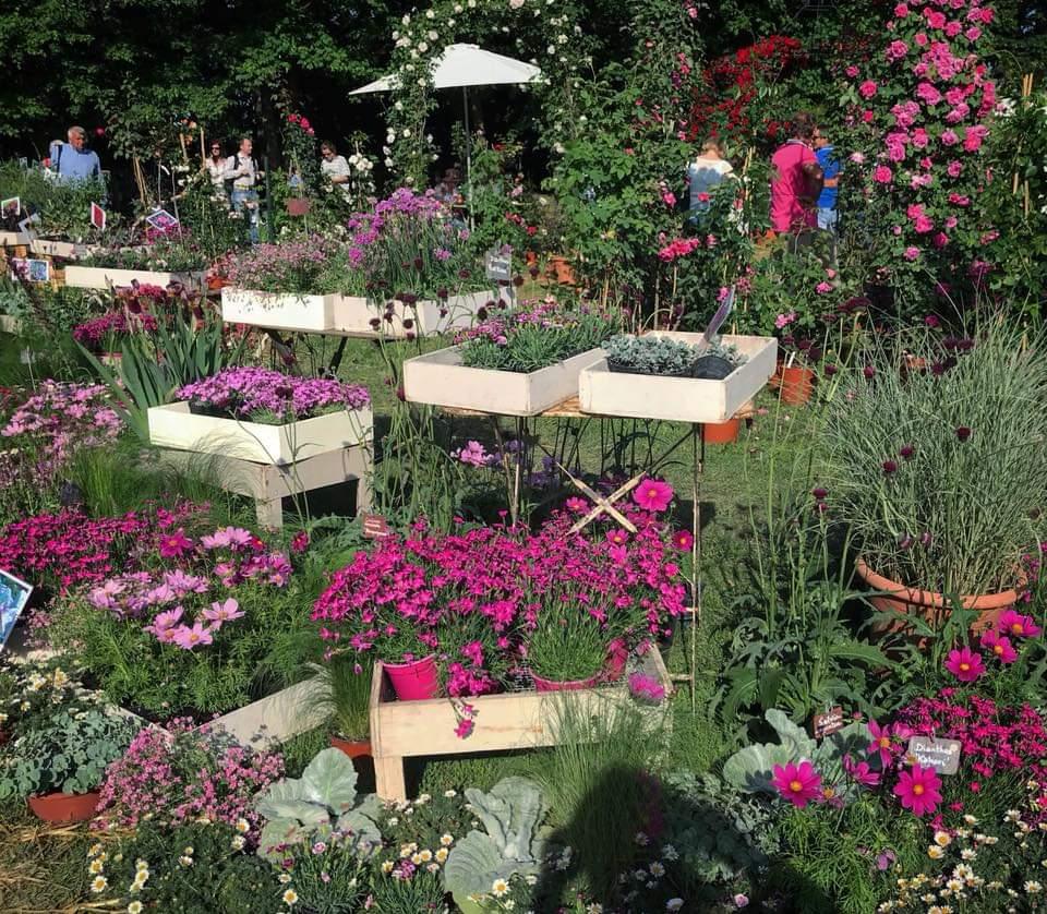 piante per eventi