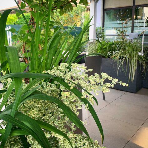 progettazione spazi verdi per bar