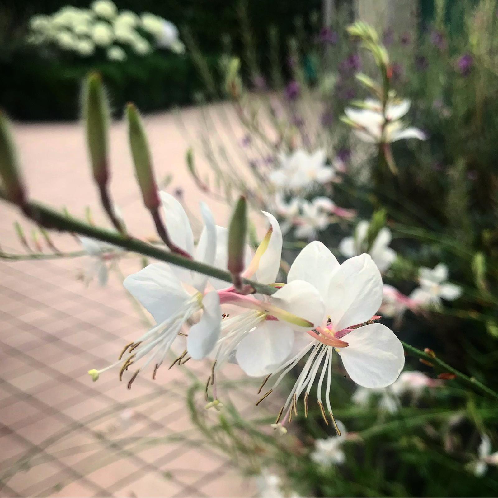 vivaio campana fiori