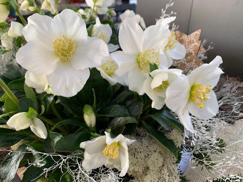 fiori natale regali bergamo